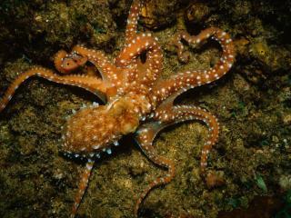 обои Морская медуза фото