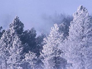 обои Зимний лес фото