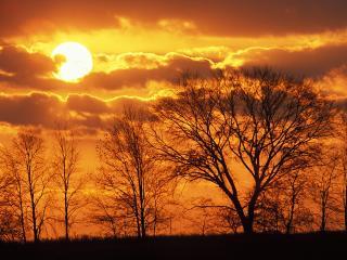 обои Солнце осенью фото
