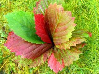 обои Гербарий из разноцветных листьев фото