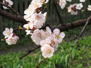 обои Весна,   все расцветает фото