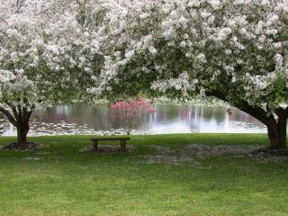 обои Скамейка на берегу пруда, под весенними цветущими деревьями фото