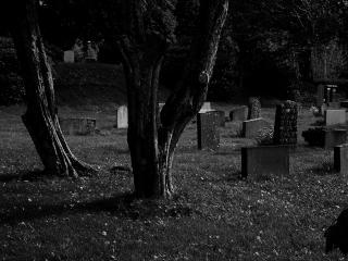 обои Дерево на кладбище фото