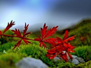 обои Осенний лист лежащий на траве фото