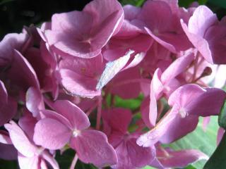 обои Чудо цветочек фото