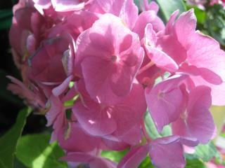 обои Цветок нежность фото