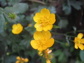 обои Желтые цветы под росой фото