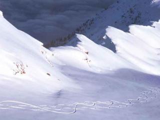 обои Загадочные следы на снегу фото