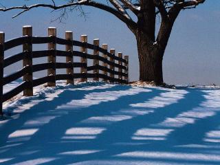 обои для рабочего стола: Зимние тени