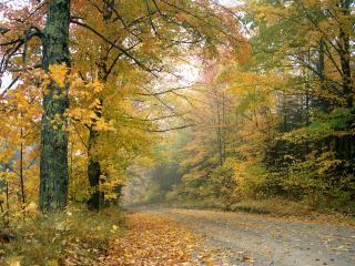 обои Crisp Autumn Afternoon, Vermont фото