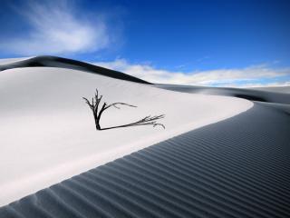 обои Ветка в пустыне фото