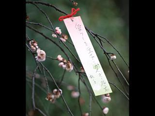 обои Дерево счастья в Японской провинции фото