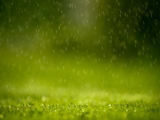 обои Дождь в зеленом лесу фото