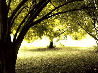 обои Солнечной осенью, в тени деревьев парка фото