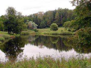 обои Летний пруд, на опушке смешанного леса фото