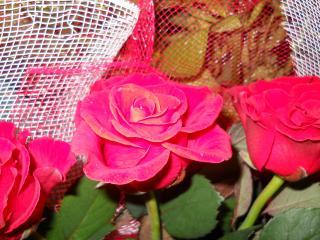 обои Красная роза в букете фото
