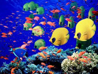 обои Желтые,   зеленые полосатики в глубинах океана фото