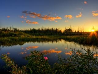 обои Лесной летний пруд, на закате солнца фото