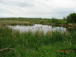 обои Заросший камышами летний пруд, на окраине фото
