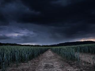обои Темные тучи над пшеничным полем фото