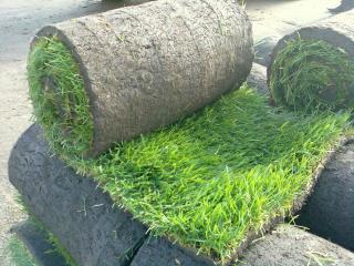 обои Трава для газонов фото