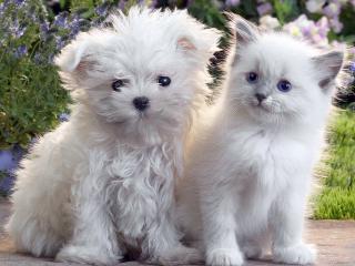 обои Щенок и котёнок фото