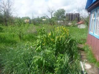обои Домик в деревне фото