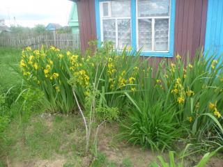 обои Дом в деревне фото