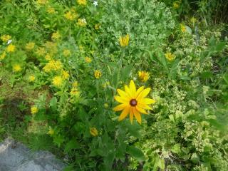 обои Замечательные цветы фото