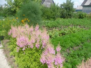 обои Деревенские цветы фото