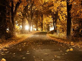 обои Осеняя дорога на фоне яркого солнца фото