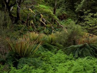 обои Папоротники в лесу фото