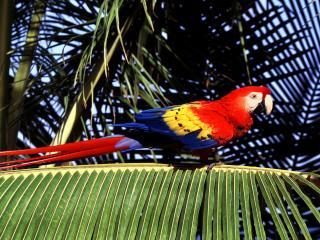 обои Красивый попугай на ветке пальмы фото