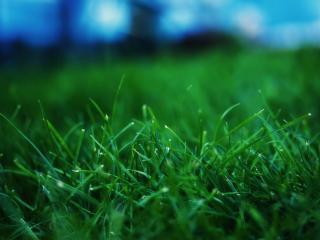 обои Утренняя зеленая травка фото