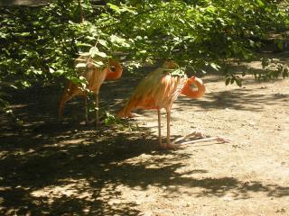 обои Розовый фламинго фото