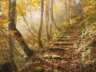 обои Лестница в осень фото