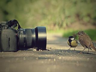 обои Птичья фотосессия фото