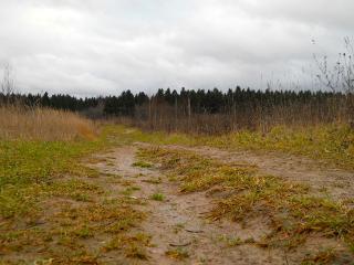 обои Дорога в лес фото