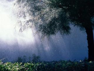 обои Солнце светит у дерева при дожде фото