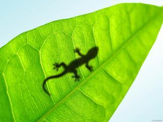 обои Зеленый лист фото