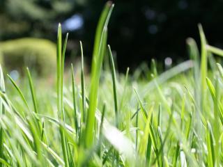 обои Зеленая трава фото