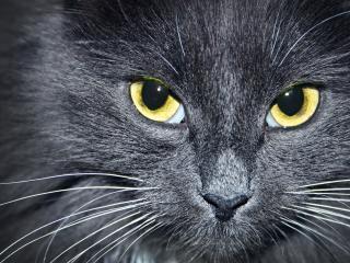 обои Желтые глаза фото