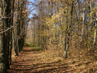 обои Дорога в осень фото