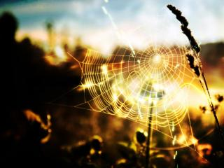обои Колосья сухих трав и паутинка фото