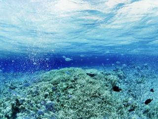 обои Море под водой фото