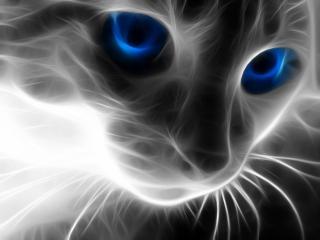 обои для рабочего стола: Кошка с голубыми глазами