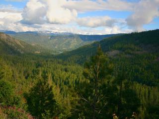 обои Пейзаж древних лесов фото