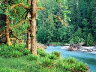 обои Голубой весенний ручей, у подсохшего дерева фото