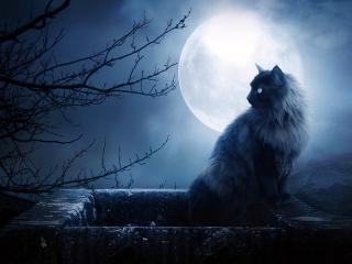 обои Кошка при луне фото