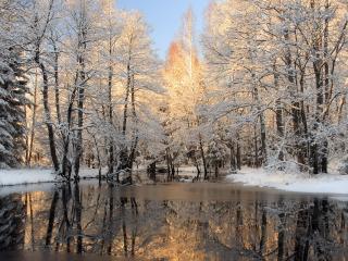 обои Зимний пруд в сквере фото